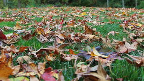 Autumn leaves covering the ground stock video