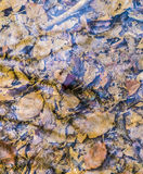 Autumn leaves creek color Royalty Free Stock Image