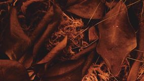Autumn Leaves. Crisp image of a beautiful leaf bed in autumn time Royalty Free Stock Photos