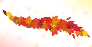 Autumn leaves curl on light background Royalty Free Stock Photo