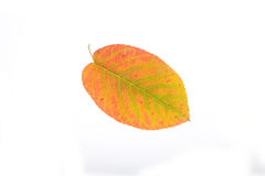 Autumn leaves cutout Stock Photography