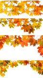 Autumn Leaves d'isolement Photo stock