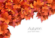 Autumn Leaves Dalingsachtergrond De explosie van de kleur Stock Foto's