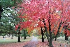 Autumn Leaves dans un cimetière de vétérans Photographie stock libre de droits