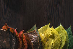 Autumn leaves on dark background. Multicolor Royalty Free Stock Photo