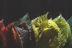 Autumn leaves on dark background. Multicolor Stock Image