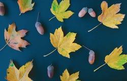 Autumn leaves on dark blue background stock image