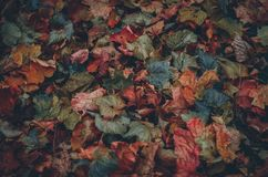 Autumn leaves dark colorful textured background. Copy space Stock Photos