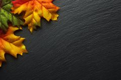 Autumn leaves on a dark slate royalty free stock photography