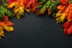 Autumn leaves on a dark slate royalty free stock photo