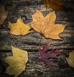 Autumn leaves on a dark wooden texture, top view. Autumn leaves on a wooden texture, top view royalty free stock photo