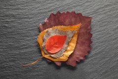 Autumn leaves. Dead wilted different leaves on slate plate composition - diversification concept royalty free stock photo