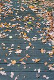 Autumn leaves and decking stock photos