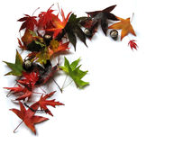 Autumn leaves decoration. A decoration of colorful wet autumn leaves and some chestnuts stock images
