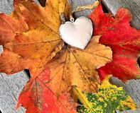 Autumn leaves with decorative heart