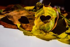 Autumn leaves decorative Stock Images