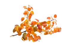 Autumn leaves decorative Stock Photo