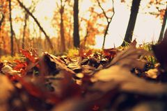 Autumn, Leaves, Depth Royalty Free Stock Photography
