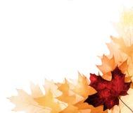 Autumn leaves for design stock photos