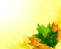 Autumn leaves for design royalty free stock photo