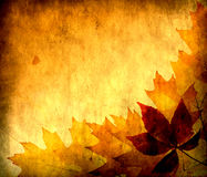 Autumn leaves for design Royalty Free Stock Photos