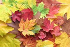Autumn leaves design Royalty Free Stock Image