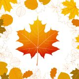 Autumn leaves design elements. plus EPS10 Royalty Free Stock Images