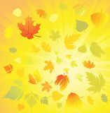 Autumn leaves design elements, vector Royalty Free Stock Photo