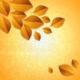 Autumn leaves design elements Stock Photos