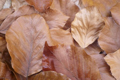 Autumn leaves detail on the ground. Nature background Royalty Free Stock Images