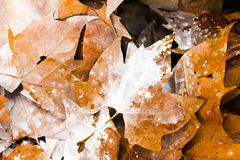 Autumn Leaves Detail Paint Foto de archivo libre de regalías