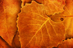 Autumn leaves details nature background Stock Photos