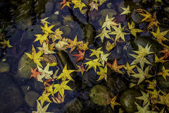 Autumn Leaves di colore Fotografia Stock