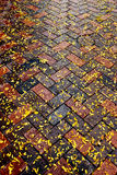 Autumn leaves on diagonal brick sidewalk after rain. Sidewalk covered with wet yellow leaves Stock Photo