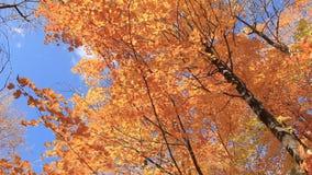 Autumn Leaves 2 die vallen stock footage