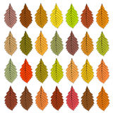 Autumn leaves of different color. Raster Stock Photos