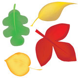Autumn leaves. Different colored leaves of autumn colors Stock Images