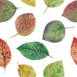 Autumn leaves of different colors drawn watercolor. royalty free illustration