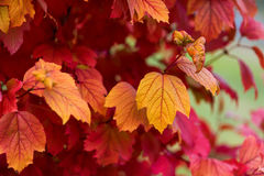 Autumn leaves of different colors Stock Photography