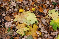 Autumn leaves of different colors royalty free stock images