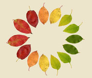 Autumn Leaves In Different Colors. Scanned, arranged, and tinted Royalty Free Stock Photography