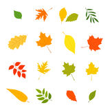 Autumn leaves from different trees Royalty Free Stock Photos