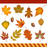 Autumn leaves digital clipart Royalty Free Stock Images