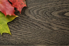 Autumn leaves directly from above Stock Photo