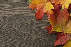 Autumn leaves directly from above Stock Images