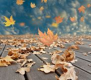 Autumn winter background leaves wind weather Royalty Free Stock Images