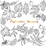 Autumn leaves doodles set Royalty Free Stock Photos