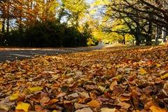 Autumn Leaves door een landweg stock fotografie