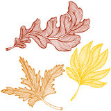 Autumn leaves drawing Stock Photography