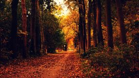 Autumn, Leaves, Dried Royalty Free Stock Photos